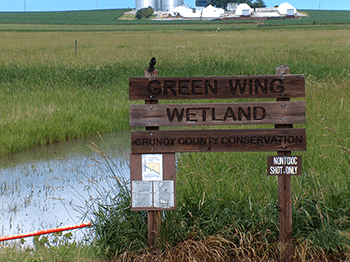 Green-Wing-Wetland-Area350
